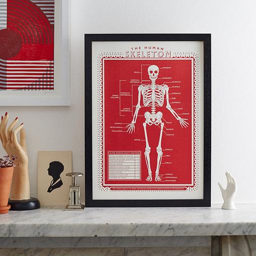 pressed and folded skeleton
